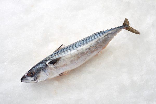 makreel vers